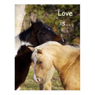 El amor de los caballos es postales