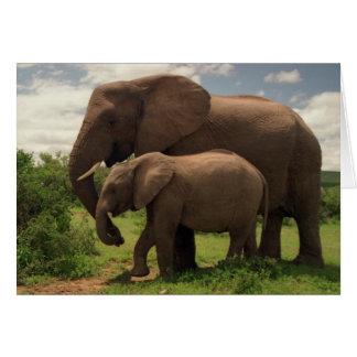 El amor de madre - elefantes - tarjeta de