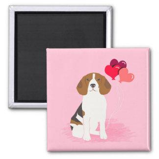 El amor del beagle hincha el imán