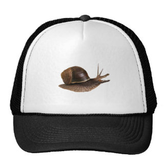 el animal del Croco-caracol morph Gorros Bordados