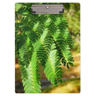 El árbol de seda persa sale del tablero