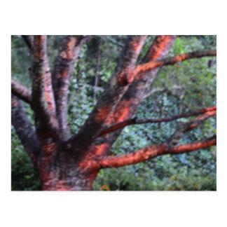 El árbol que sube postal