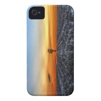 El árbol solo iPhone 4 Case-Mate protectores