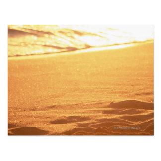 El borde del agua (tarde) 3 postal