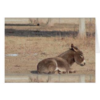 El burro solo tarjeta de felicitación