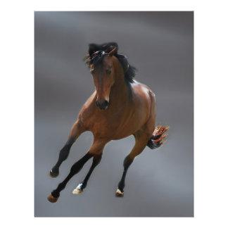 El caballo del vaquero llamó Riboking Flyer A Todo Color