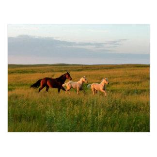 El caballo hermana la yegua y pare postal de los