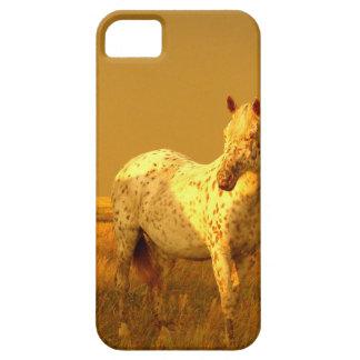 El caballo manchado en el resplandor de oro de una funda para iPhone SE/5/5s