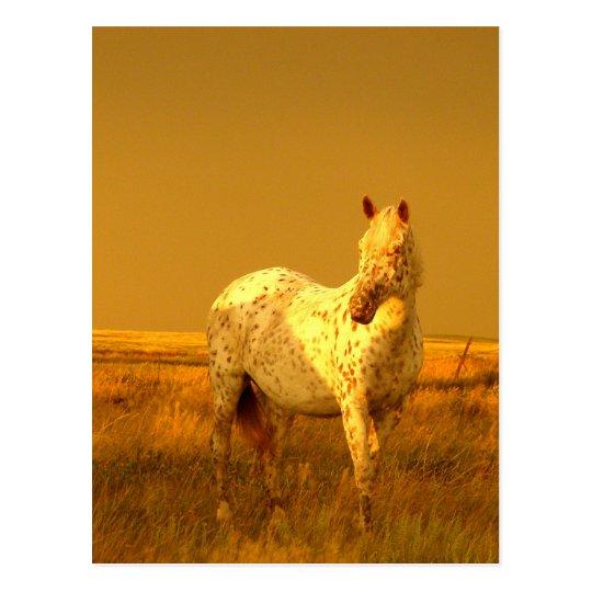 El caballo manchado en el resplandor de oro de una postal