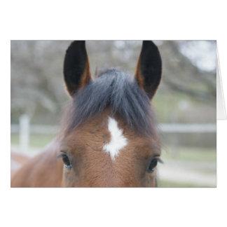 El caballo observa la tarjeta de cara