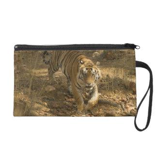 El caminar del tigre de Bengala