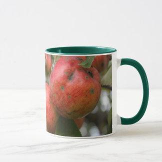 El cangrejo Apple asalta Taza