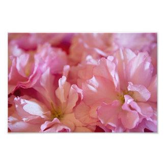 El cangrejo rosado Apple de la primavera florece Fotografia