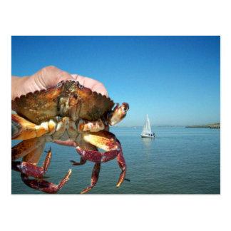 El cangrejo y el barco de vela, postal