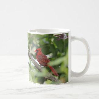 El cardenal septentrional se coloca en una rama de taza de café