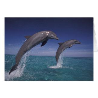 El Caribe, Tursiops 8 de los delfínes de Bottlenos Tarjeta De Felicitación