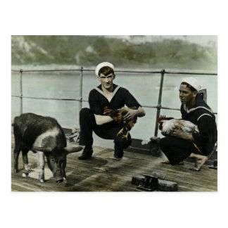 El cerdo del gallo del marinero del vintage WWII Postal