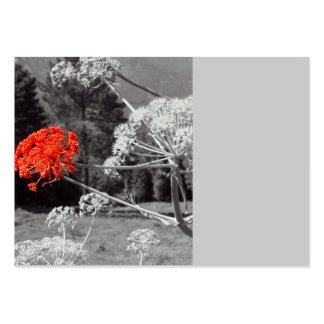 El chapoteo de B&W, florece rojo Plantilla De Tarjeta De Negocio