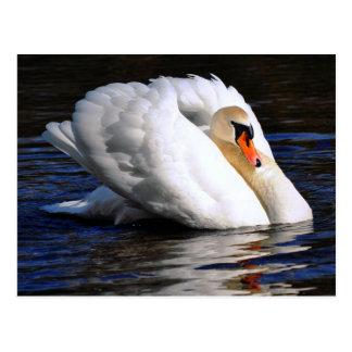 El cisne fija la vela postal