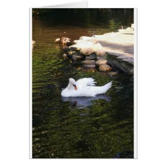 El cisne tarjeta de felicitación