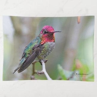 El colibrí de Ana masculino imponente en el árbol