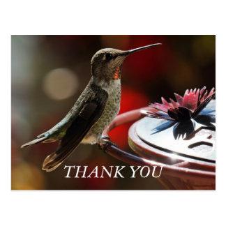 El colibrí le agradece cardar postal