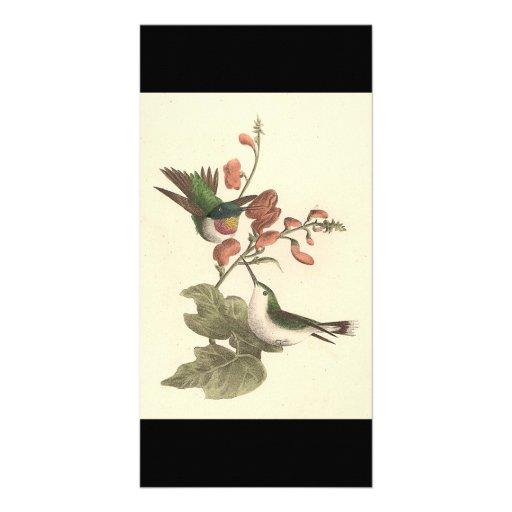 El colibrí Rojo-throated (colubris de Trochilus) Plantilla Para Tarjeta De Foto