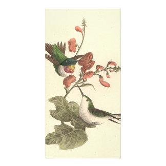 El colibrí Rojo-throated (colubris de Trochilus) Tarjeta Fotografica