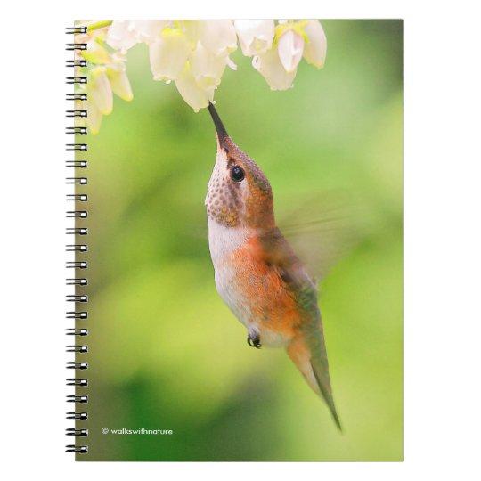 El colibrí rufo sorbe el néctar del flor del cuaderno