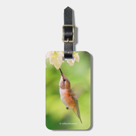 El colibrí rufo sorbe el néctar del flor del etiquetas para maletas