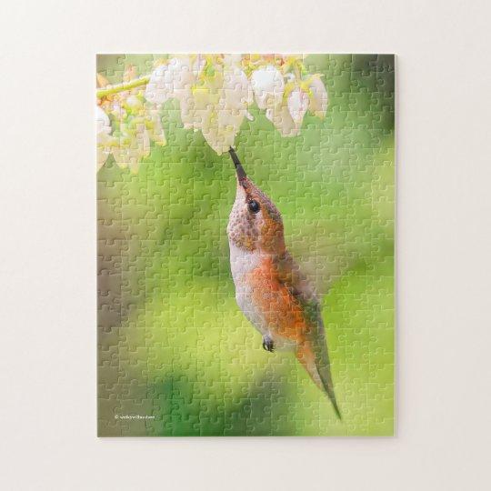 El colibrí rufo sorbe el néctar del flor del puzzle