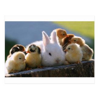 El conejo de la madre adopta algunos polluelos postal