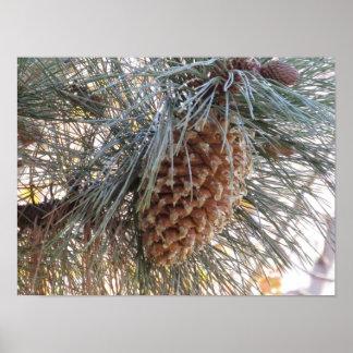El cono del pino de la cuchilla póster