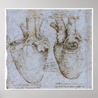 El corazón humano, Leonardo da Vinci Póster