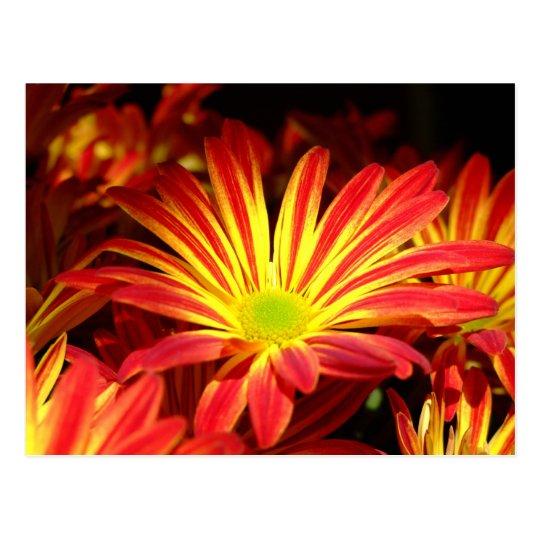 El crisantemo rojo y amarillo florece postal