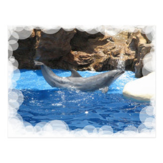 El delfín engaña la postal