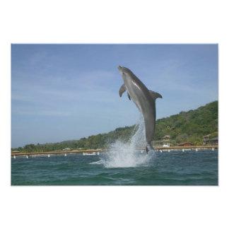 El delfín que salta, Roatan, islas de la bahía, Ho Fotografias