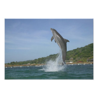 El delfín que salta, Roatan, islas de la bahía, Ho Impresión Fotográfica