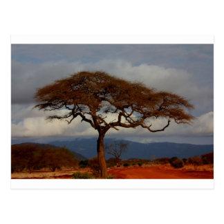 El destino de la sabana de la naturaleza del safar postal