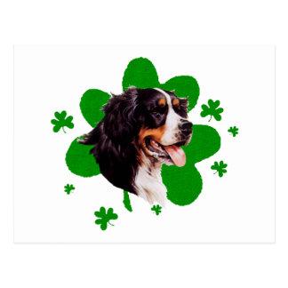 El día de St Patrick del perro de Bernese Mt. Postal