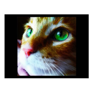 "El ""disco dice hola"" la postal linda del gato postal"