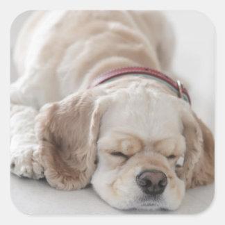 El dormir del perro de cocker spaniel calcomanías cuadradases
