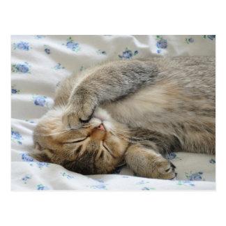 El dormir lindo del kittin postal