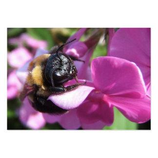 El dormir manosea el ATC del ~ de la abeja Tarjetas De Visita