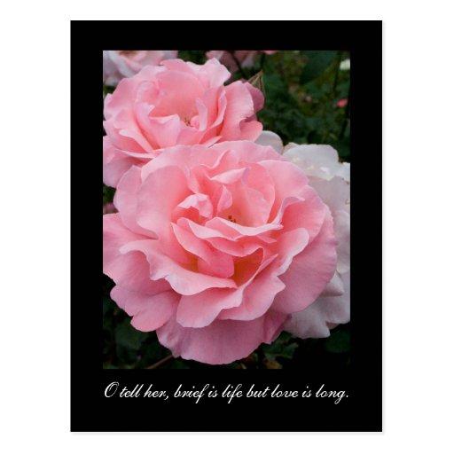 El escrito es vida pero el amor es largo (cita de tarjeta postal