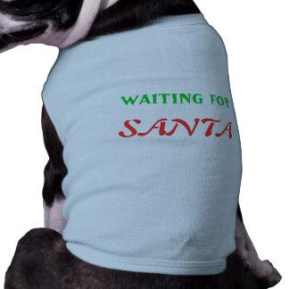 El esperar en Santa Ropa Perro