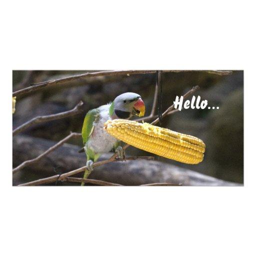 El flor dirigió la tarjeta de la foto del Parakeet Tarjeta Fotografica