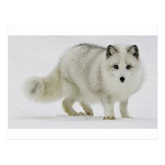 El Fox ártico blanco mezcla en la nieve Postal