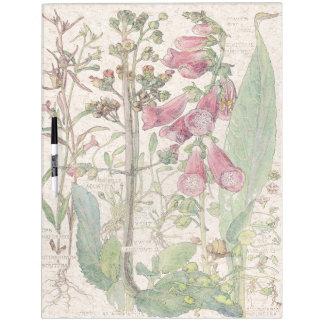 El Foxglove botánico florece al tablero seco del