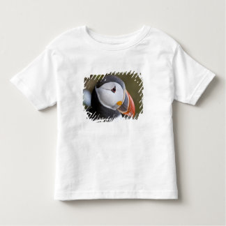 El frailecillo atlántico, un ave marina pelágica, camiseta de bebé